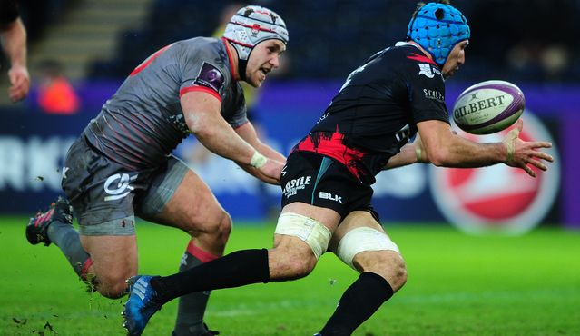 Tipuric relishing knockout bow